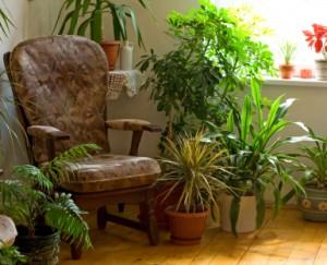 plante-depolluante1