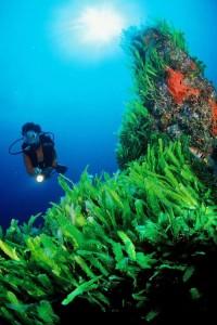 Algues tueuses