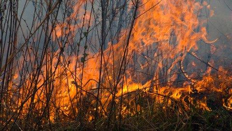 foret-pyromane