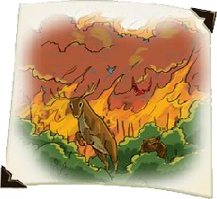incendit animaux
