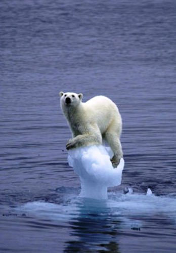 fonte-glace-ours