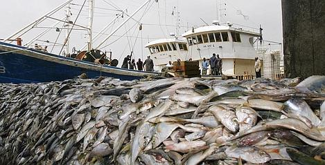 Photo représentative de la surpêche des poisson dans le monde