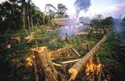 deforestation-ghana
